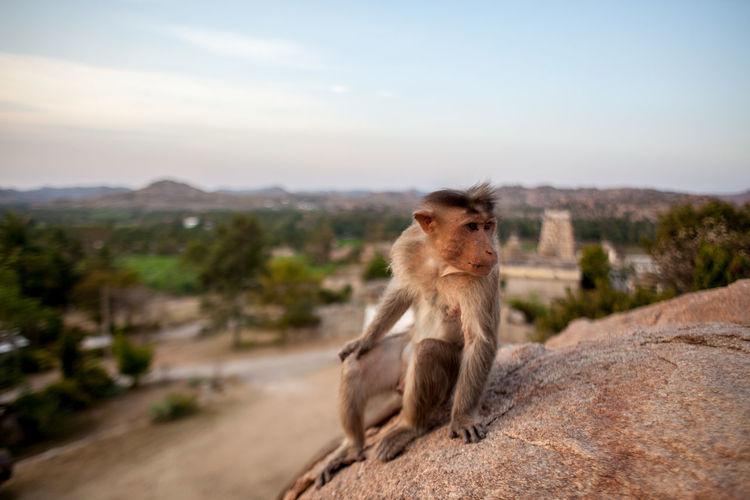 Monkey on rock against sky