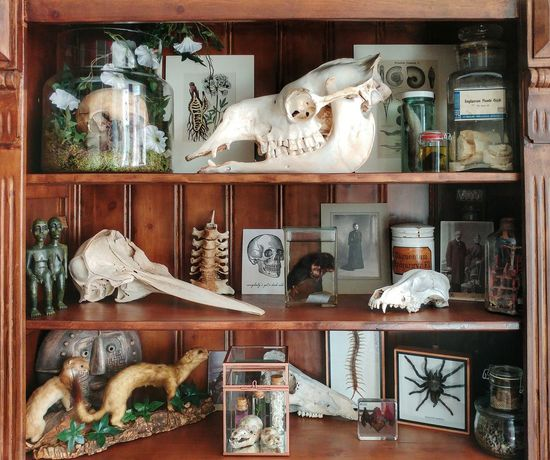 Cabinet Of Wonders Cabinet Of Curiosities Large Group Of Objects Shelf Skulls And Bones Skulls Taxidermy Weird Stuff Human Skull Camel Skull Dolphin Skull Curiosity Curiosity Things Curiosities Curiosity Cabinet Variation No People Indoors  Animal Representation Animal Themes Collection Of Vintage Things Spooky Beauty In Nature Collection Collection Of Objects