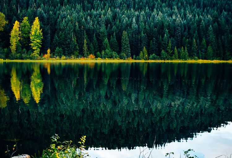 peaceful and scenic lake against Mt. Hood. Oregon Reflection Tree Tranquility Plant Lake Tranquil Scene Beauty In Nature Water Scenics - Nature Nature Non-urban Scene Growth No People Forest Idyllic Day Green Color Standing Water Outdoors Mt. Hood  Oregon Yellow
