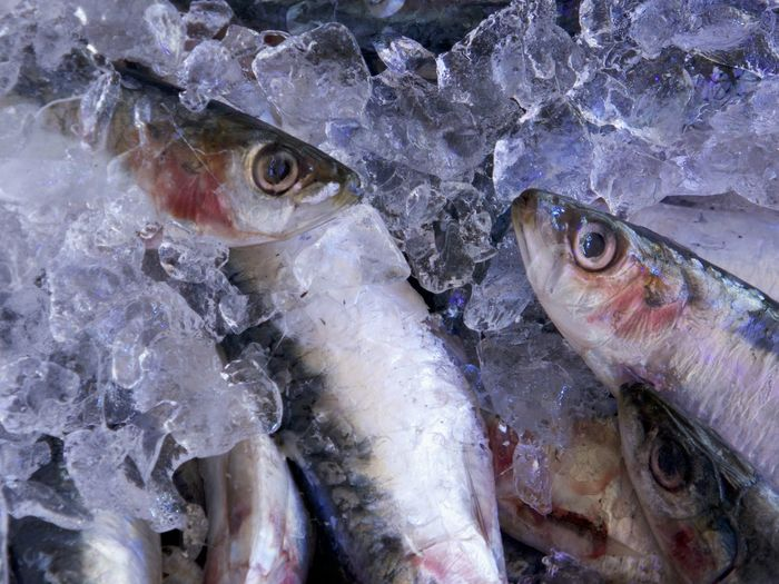 Close-up Cold Temperature Fish Fish Market Food Food And Drink Freshness Ice Market No People Raw Food Sardines Seafood