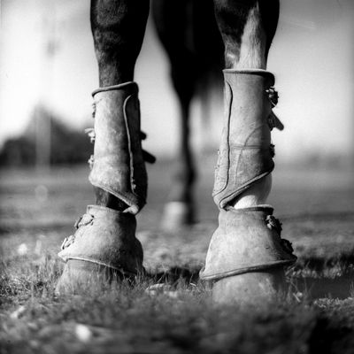 Transportation: Horse Black And White Black And White Photography Close-up Grass Ground Level View Horse Horseshoe Low Section Shallow Depth Of Field Shallow DOF Shoe Standing
