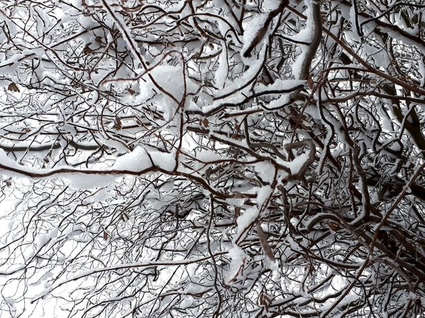 Backgrounds Full Frame Pattern Close-up Detail Textured  White Snow Covered Cold Abstract Backgrounds Rough