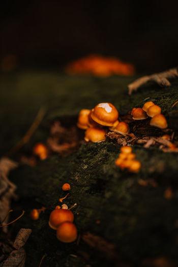 Close-up of orange berries on ground