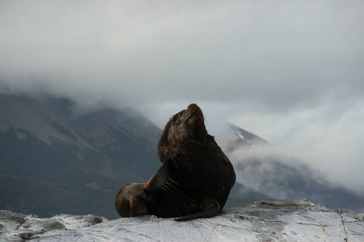 View Of Seal On Rock At Coast