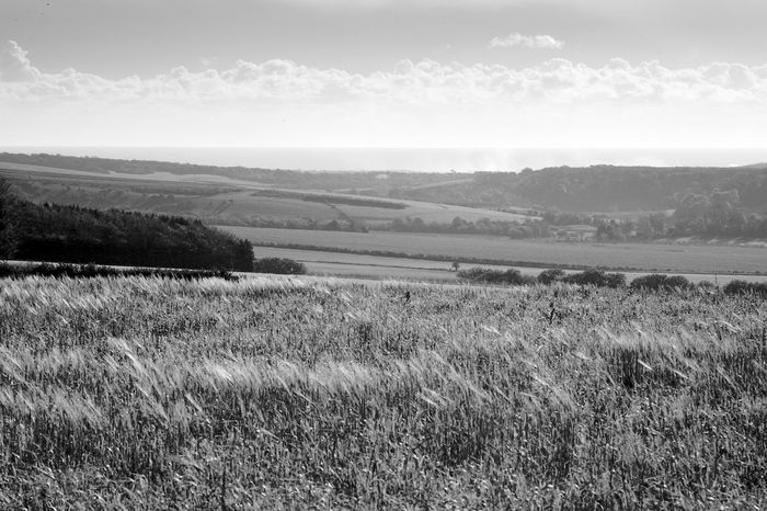 The Distant Sea Environment Landscape Field Land Tranquil Scene Grass Tranquility Plant Sky Beauty In Nature Nature Scenics - Nature Day Rural Scene Outdoors Cloud - Sky Agriculture Sea Blackandwhite Black And White