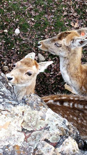 Animal Themes Nature Animals In The Wild Biche