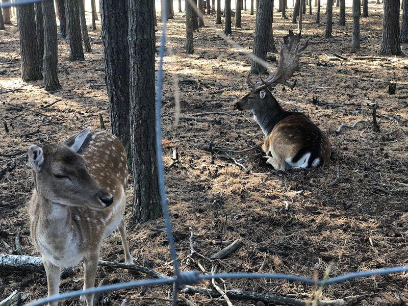 Sicherheitszaun Schutz Schutz Vor Dem Menschen Wildgehege Nature No People Day Animal Vertebrate Land Animal Themes