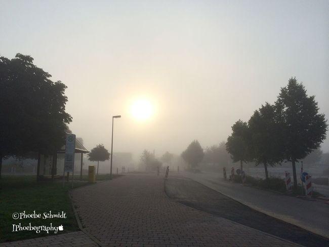 Fog Nebel Sun Morning