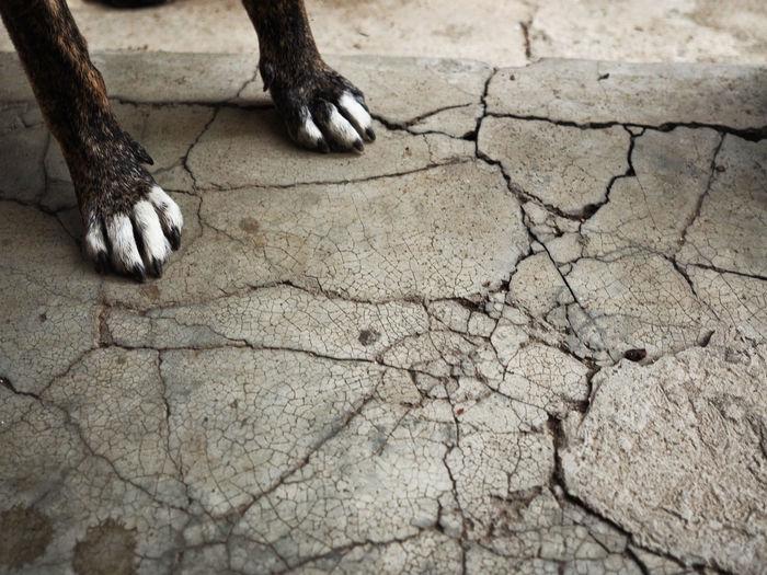 Close-up of dog legs on footpath