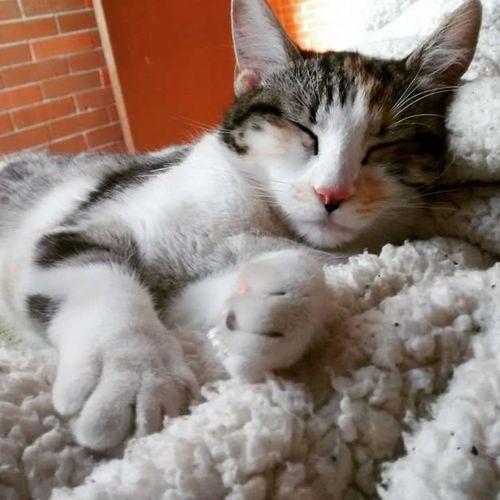 Domestic Cat Pets Domestic Animals Feline Animal Themes Catdreaming Sleeping Sleepingcat Meow Prrr Kitty