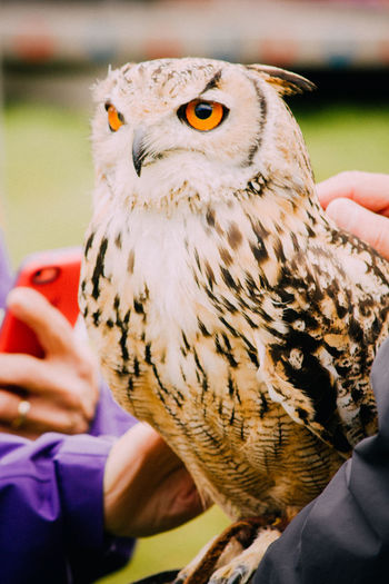 Close-Up Of Eurasian Eagle Owl In Zoo