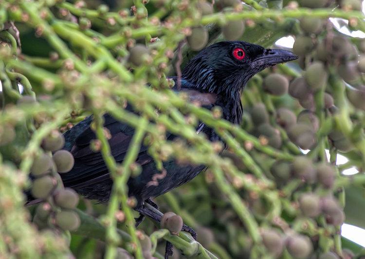 Close-up of metallic starling perching on branch