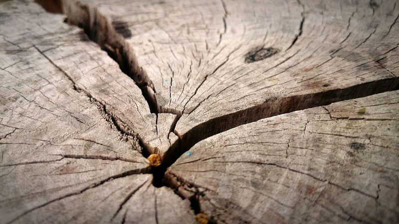 Log Center Of Trunk Tronco Nature Naturaleza Macro Photography Macro_collection Macro Wallpaper Wallpapers