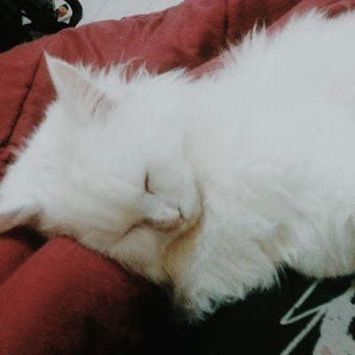 Qualcuno mi dorme addosso
