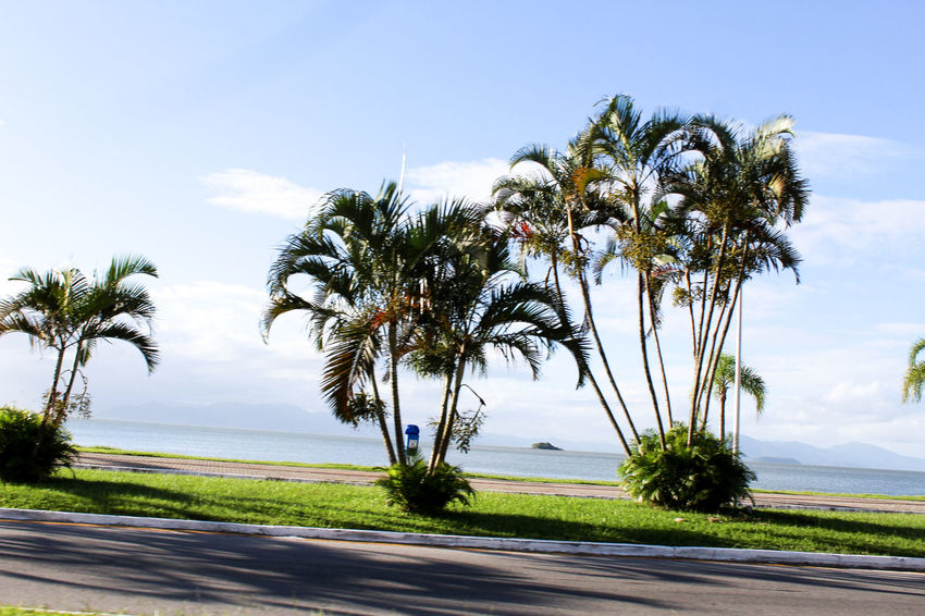Coqueiros a beira mar Coqueiros Mar Praia Areia Palm Tree Scenics Tranquility Nature Beauty In Nature Tranquil Scene Outdoors Growth Landscape Horizon Over Water Water Cloud - Sky