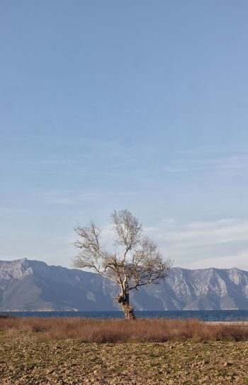 Tree on field by mountain against sky