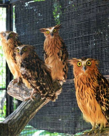 What are you looking for? Taking Photos Owls💕 Animal Hanging Out Malacca