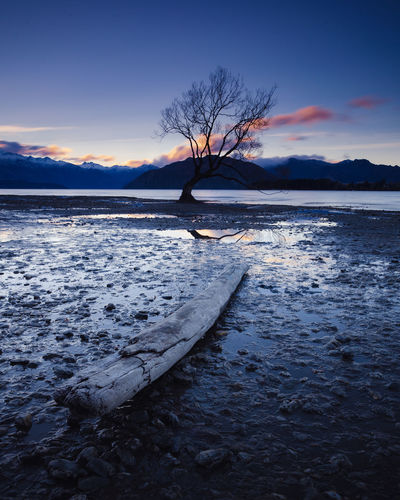 Wanaka Bare Tree Beauty In Nature Cloud - Sky Cold Temperature Lake Nature No People Non-urban Scene Outdoors Plant Scenics - Nature Sky Snow Sunset Tranquil Scene Tranquility Tree Water Winter