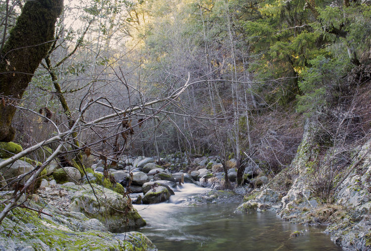 Brandy Creek on the Whiskeytown National Park