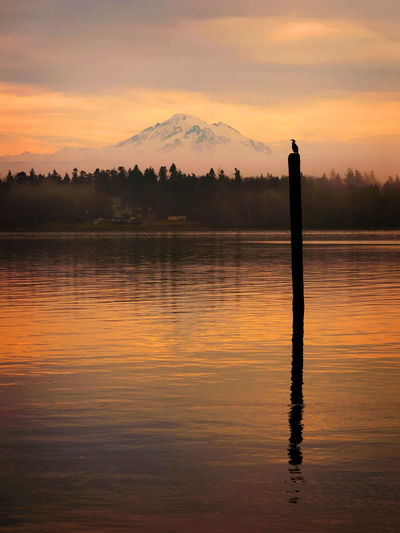 Sunrise Over Mt. Baker, Washington. A cormorant sits on an old piling during a dramatic sunrise off Lummi Island, Washington with the majestic Mt. Baker in the background. Cormorant  Lummi Island Salish Sea Snow Capped Mountains Sunrise - Dawn Washington Beauty In Nature Bird Morning Rituals Mt. Baker Nature No People Outdoors Piling Scenics - Nature Sea Sky Sunrise Sunset Tranquility Travel Destinations Volcano Water Waterfront Whatcom County