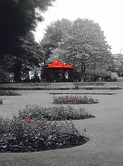 Park Band Stand Band Stand With A Red Top Subtle Beauty View Peaceful View