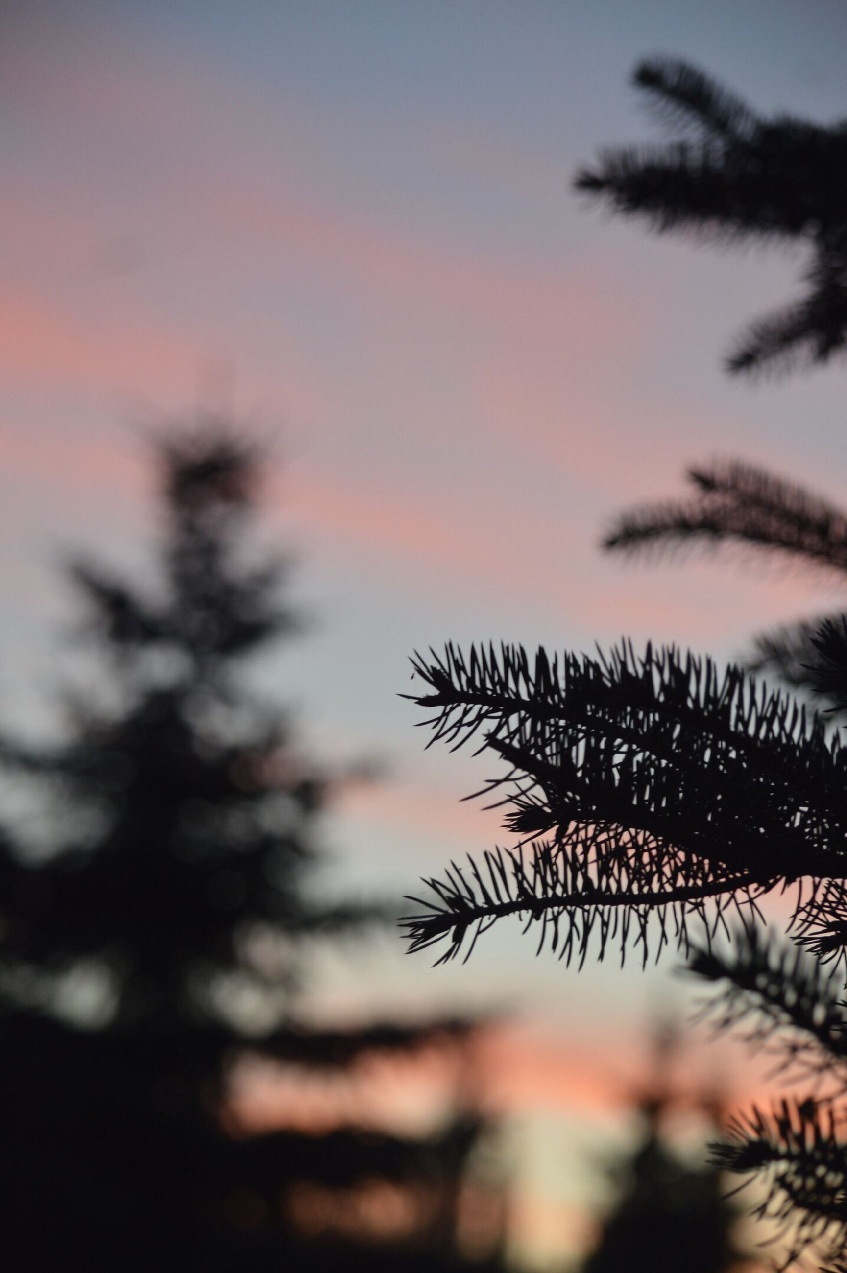 sunset, silhouette, growth, sky, nature, focus on foreground, beauty in nature, tranquility, low angle view, plant, orange color, tree, close-up, selective focus, scenics, dusk, tranquil scene, outdoors, sun, no people