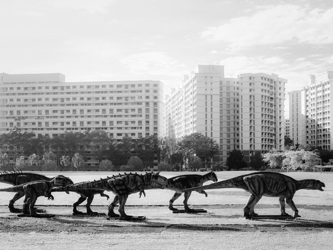 A pack of dinosaurs walking in front of residential buildings, in black and white City Dramatic Dinosaurs Pack Herd Group Troop Marching Walking Town Black And White Threat Danger Unrealistic Buildings Residential  Sky