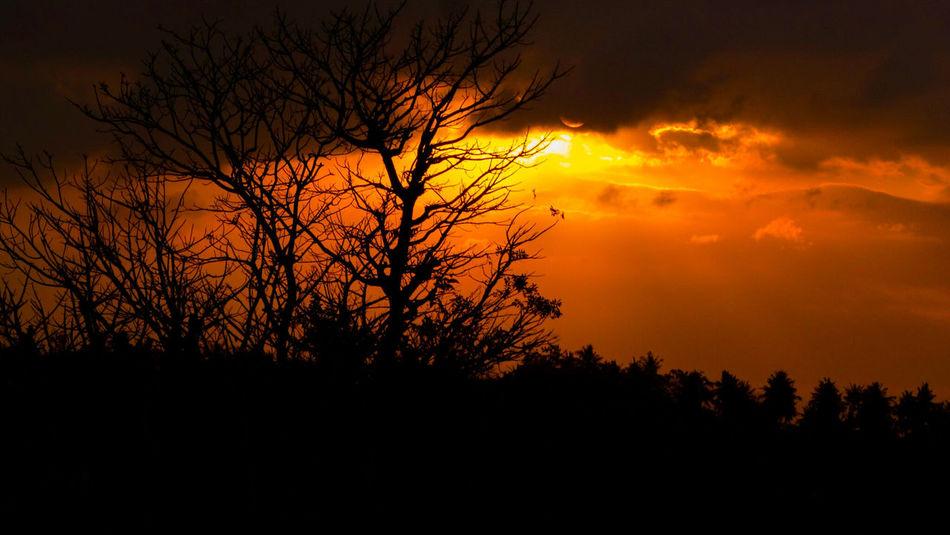 Tree Orange Color Silhouette Beauty In Nature Landscape Outdoors Rumahalir DELTA API Lombok Island NTB