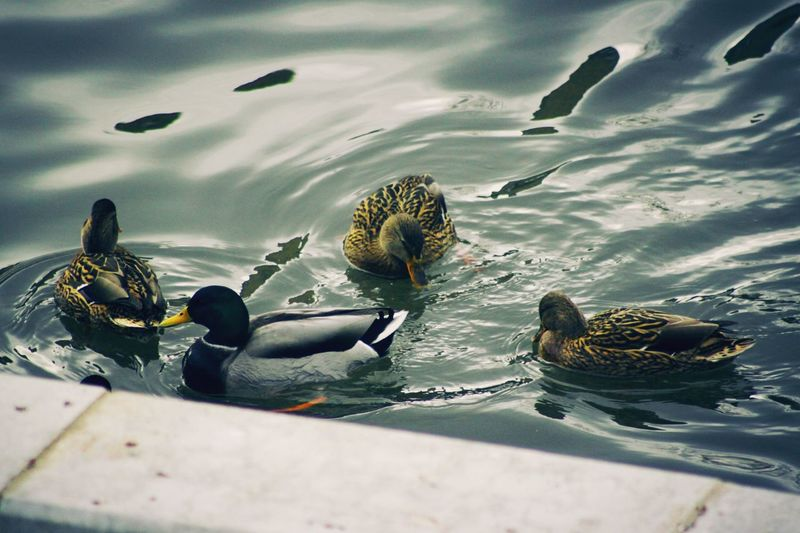 Bird Animal Themes Water Outdoors No People Wave Day Close-up Russia россия орел450 орел River Life Travel Destinations