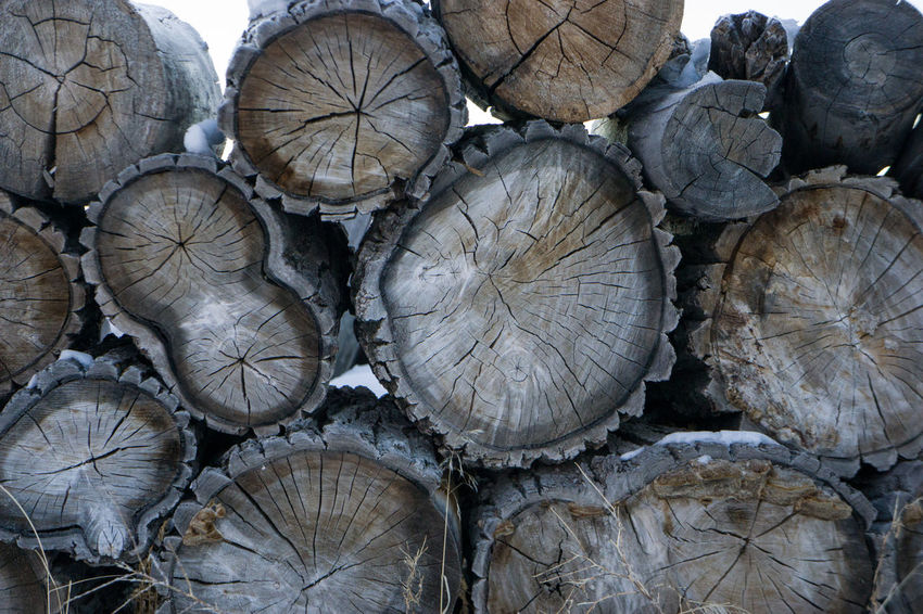 Abundance Backgrounds Cross Section Day Deforestation Fossil Fuel Fuel And Power Generation Full Frame Log Log Fire Lumber Lumber Industry No People Outdoors Pile Stack Staying Warm Textured  Timber Winter Wood Wood Fire Wood Pile Wood Stack