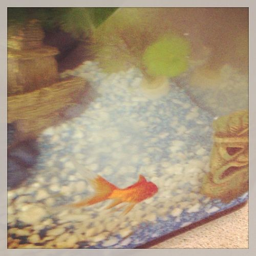 just thought ad complete the animal set ? Fish Growcho Goldfish