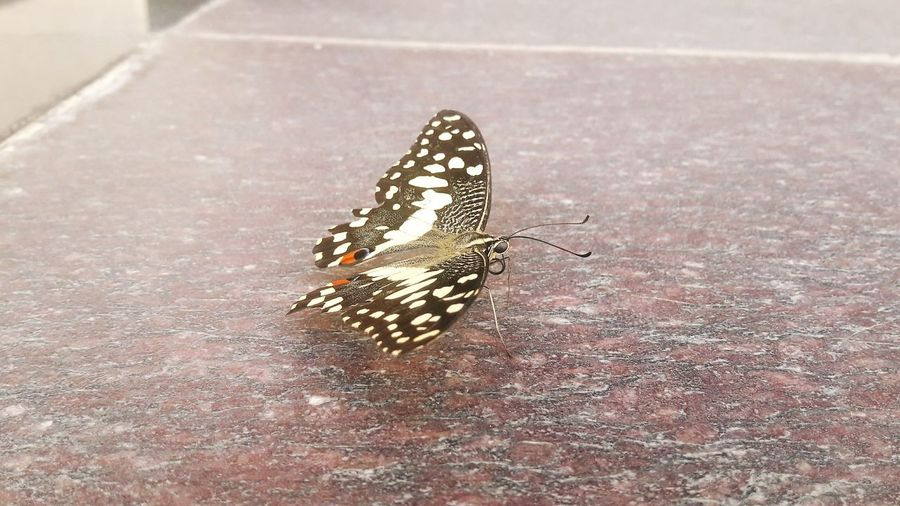 Insect Animals In The Wild Animal Themes One Animal Day Butterfly - Insect Animal Wildlife No People Outdoors Nature Close-up Perching