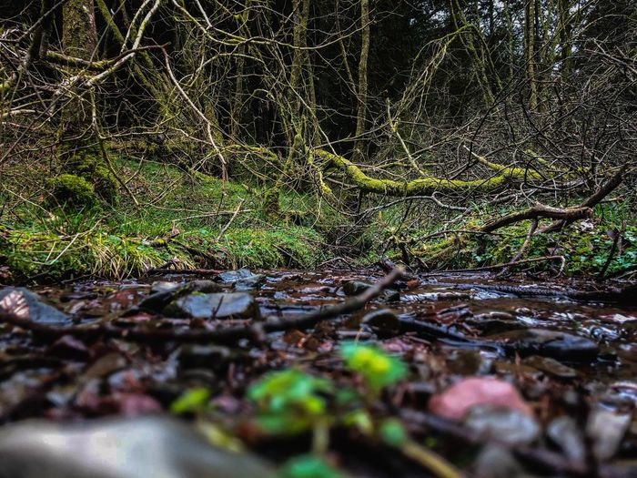 No People Water Selective Focus Plant Nature Day Close-up Tree Growth Outdoors Beauty In Nature Pattern Green Color Tranquility Moss Wet Land