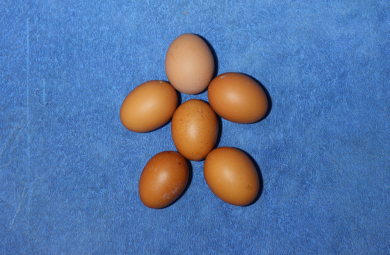 High angle view of eggs against blue background