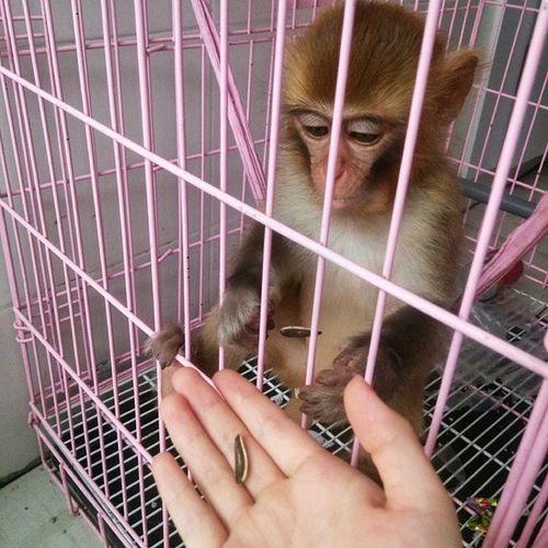 Monkey 大师兄 齐天大圣