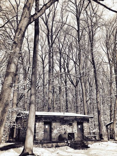 The Great Outdoors - 2017 EyeEm Awards Tree Tree Trunk Bare Tree Outdoors Nature Snow Winter Cabin Outdoor Photography Nature Nature Photography Nature On Your Doorstep Lostinthewoods Woods Landscape_Collection Newjersey No People