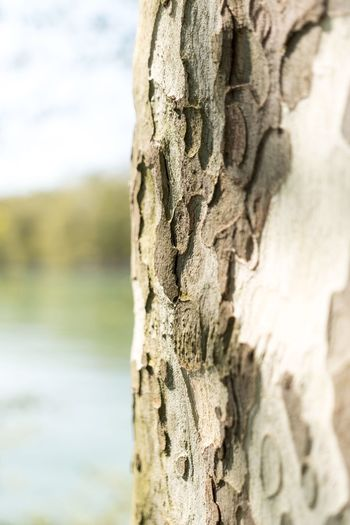 Tree Trunk Close-up Tree Textured  Bark Focus On Foreground Lake Rough Nature Water Growth Solitude Scenics No People