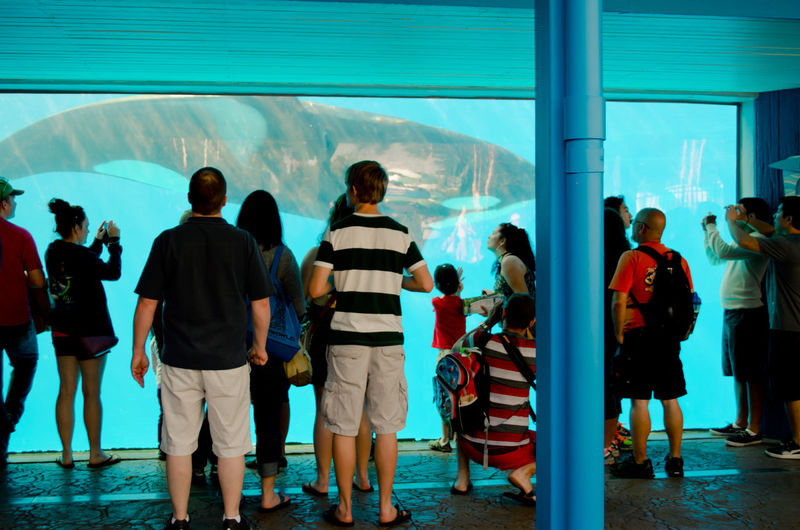 People looking at killer whale swimming in fish tank at aquarium