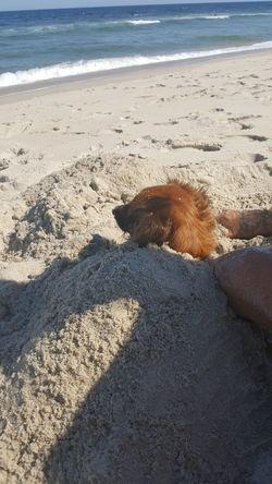 Dog Beach Life Sunshine Beach Bum Front Yard