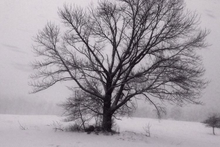 Lonely tree BlackandWhite Nature Winter Snow