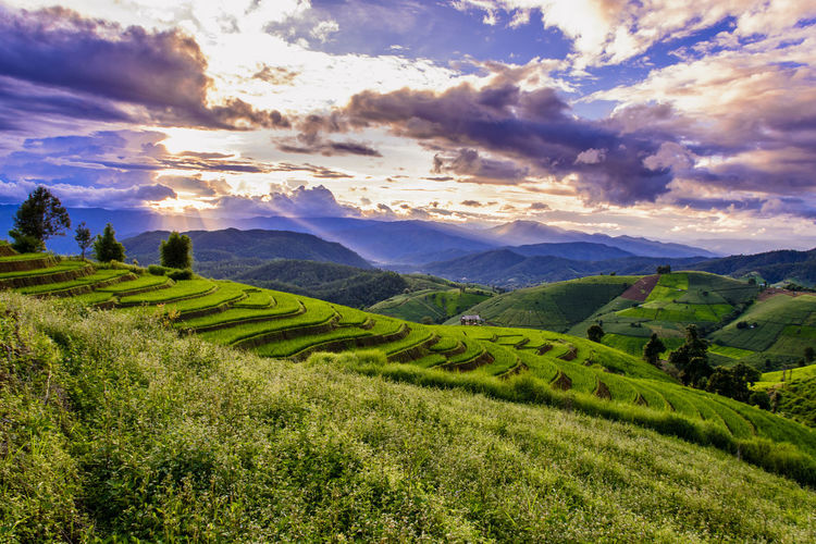 Chiang Mai | Thailand Chiangmai Agriculture Beauty In Nature Cloud - Sky Environment Field Grass Green Color Idyllic Land Landscape Mountain Mountain Range Nature No People Non-urban Scene Outdoors Plant Rolling Landscape Rural Scene Scenics - Nature Sky Tranquil Scene Tranquility
