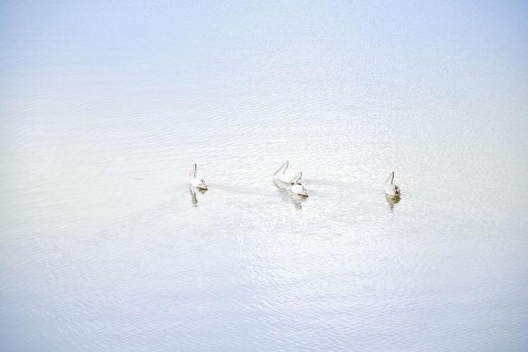 People floating on sea against sky