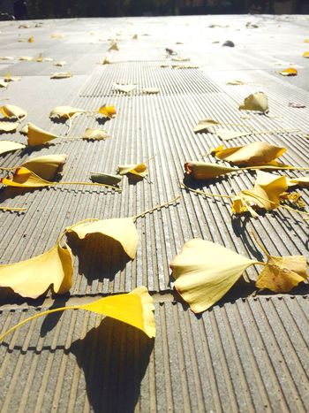 Spot and Grain Surface Level Autumn Outdoors