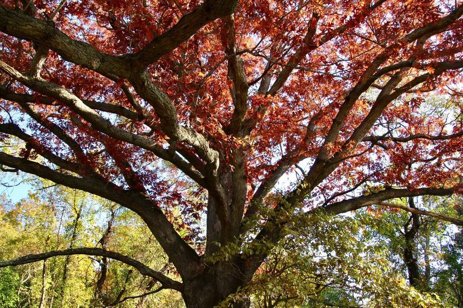 Autumn leaves 🍁 trees 🌲 beauty in nature Growth Low Angle View No People