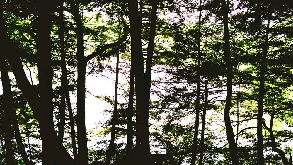 Hugging A Tree Eyeem Michigan My Running View EyeEm Nature Lover