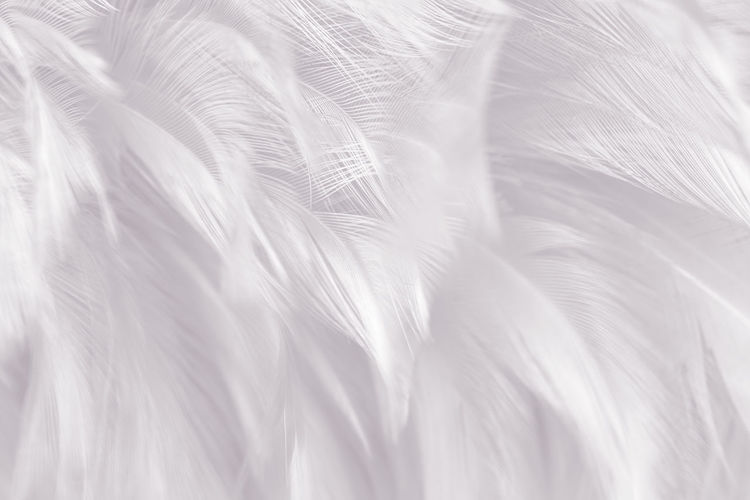 Vintage color trends chicken feather texture background