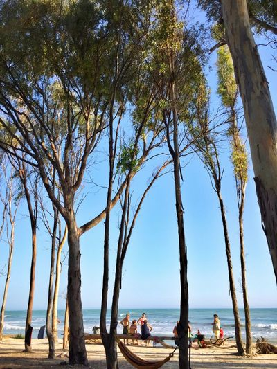 Costa Sud - Sicilia Water Sea Tree Beach Tree Trunk Men Lifestyles Nature Tranquility Calm Shore Tranquil Scene Vacations Growth Beauty In Nature Scenics Day Outdoors Person Solitude Enjoying Life Life Is A Beach Coastline Tranquility