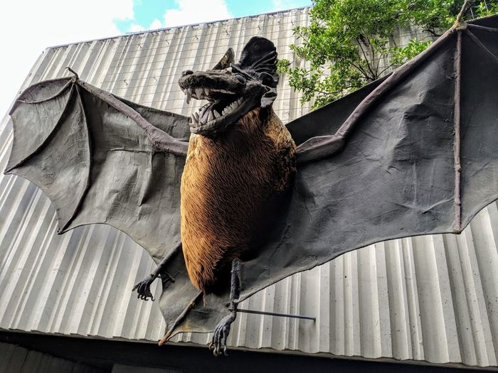 Bat Monster Bat
