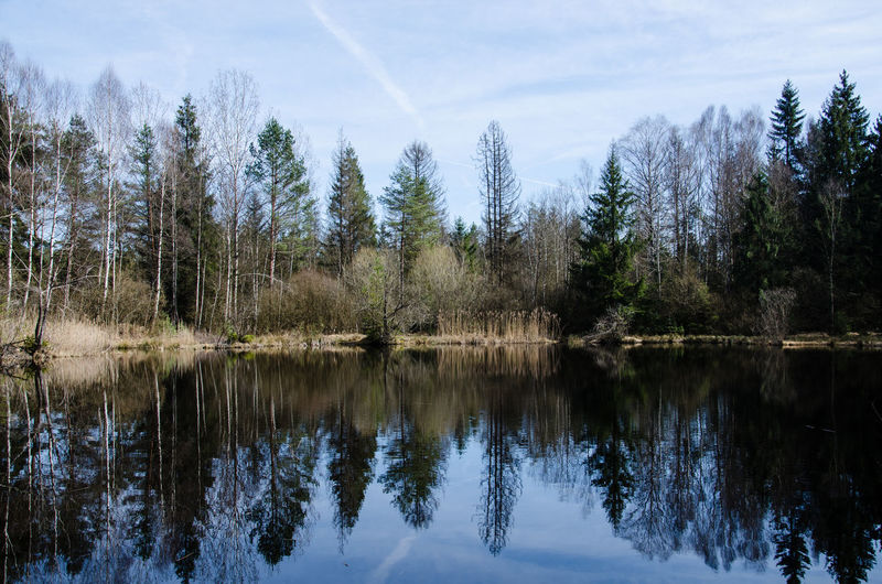 Perfect reflection 🌿 Tree Reflection Nature Water No People Sky Lake Forest Day Outdoors Scenics Beauty In Nature Tree_collection  Magnificent Awesome_nature_shots Nikon_photography_ Best EyeEm Shot Bestoftheday Tranquility Reflection Forest Photography Perfect Beautiful Day Nature Photography Nature_collection