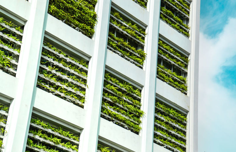 Nature meets urban. Plants lining the building windows trying to combat the city heat Textures and Surfaces Lines And Shapes Freshness Green Color Green Pattern, Texture, Shape And Form White City Building Windows Environmental Conservation Go Green Architecture Lines And Shapes Urban Geometry Nature In The City Environmental Friendly